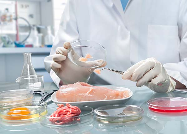 Quality control expert Inspecting chicken meat specimen in the laboratory