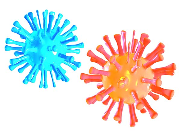 A blue and an orange microbe as seen microscopically on white background.