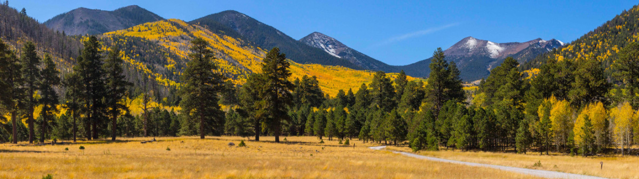 Landscape view of yellow aspen leaves and green forest in the fall at Locket Meadow, San Francisco Peaks, Arizona