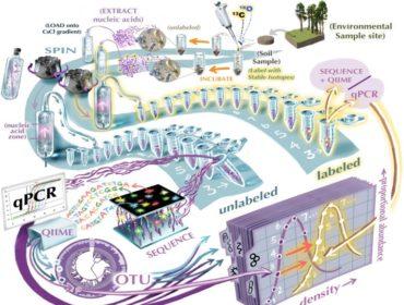 leshyk illustration linking biogeochemistry