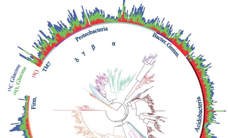 Circular color graphic shows the use of carbon and oxygen within different soil bacteria.