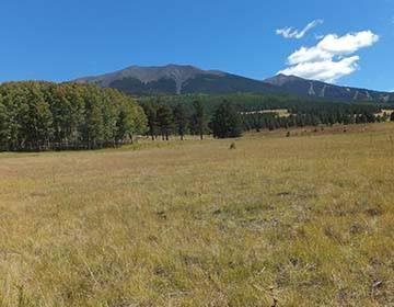 field and mountain in arizona