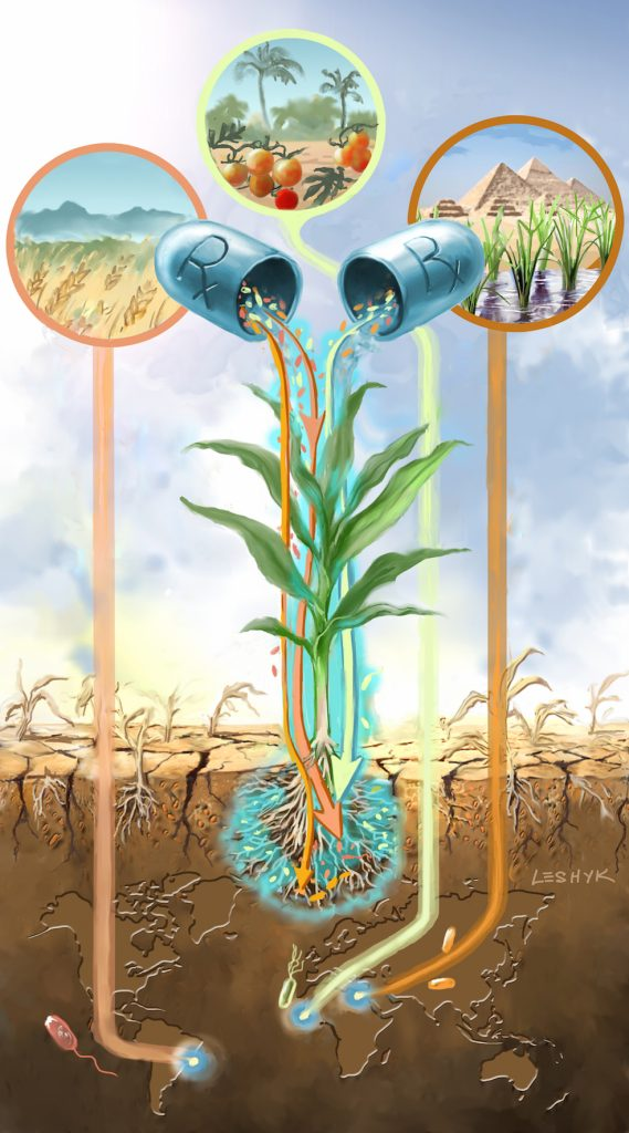leshyk illustration rhizosphere