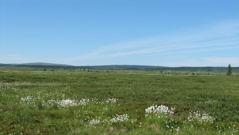 field studied for permafrost loss by schuur
