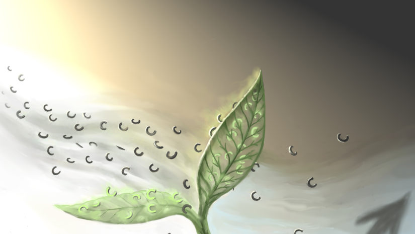 leshyk illustration nature