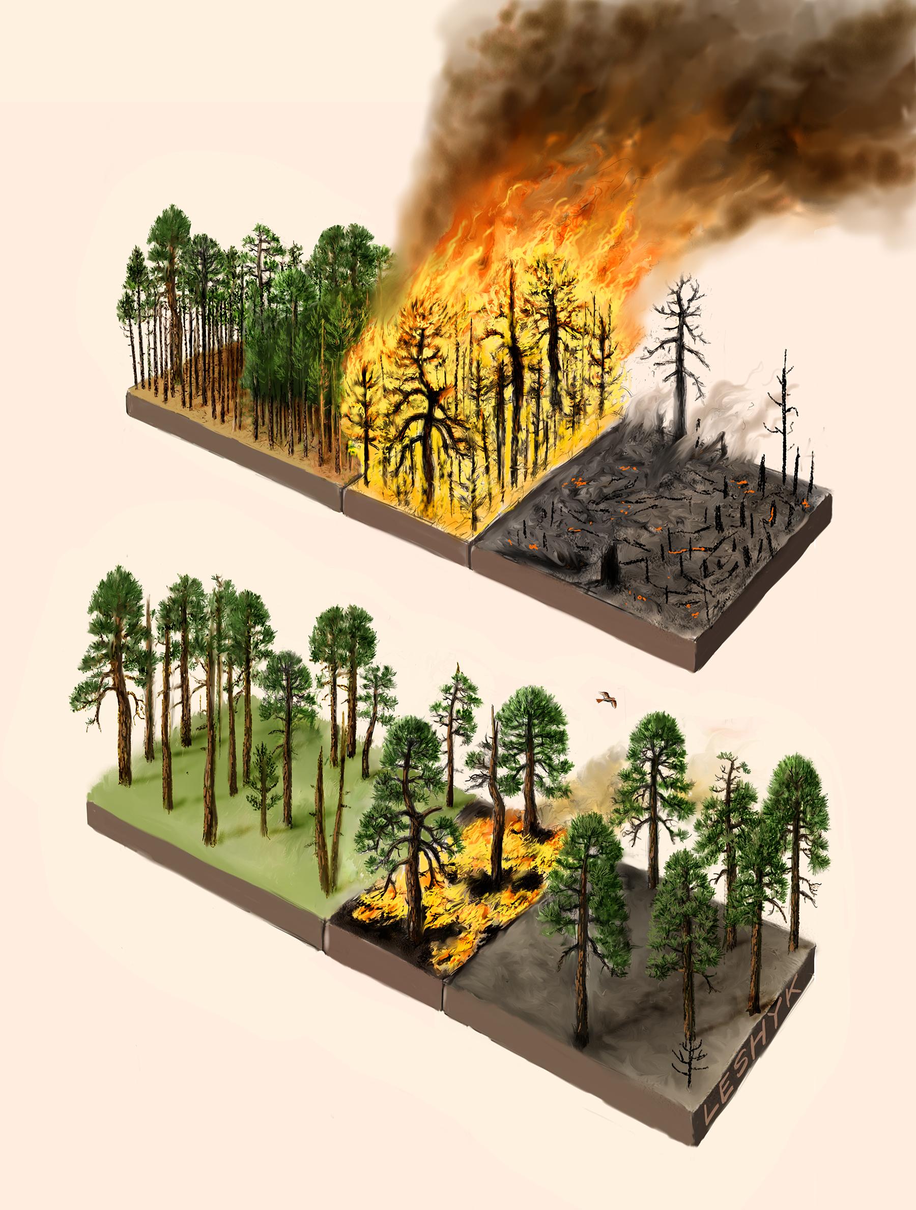 leshyk illustration carbon management