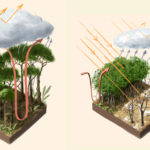 leshyk illustration rainforest temperate flux