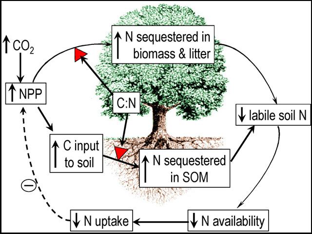 Ecosystem model