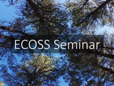 Pine_trees_Ecoss_seminar