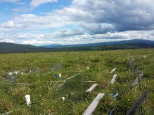 schuurlab fieldsite in Healy