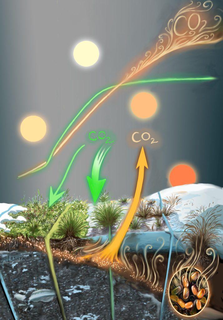leshyk illustration tundra carbon