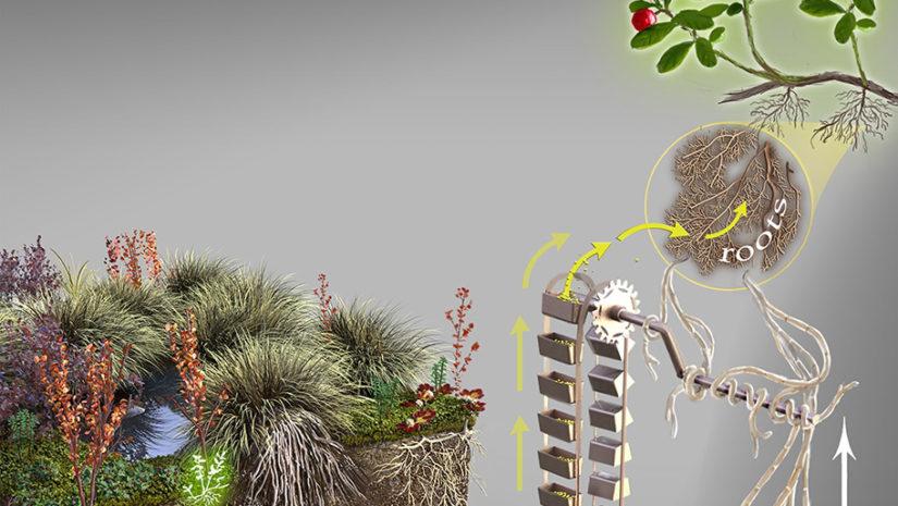 Hewitt mycorrhizal fungy illustration