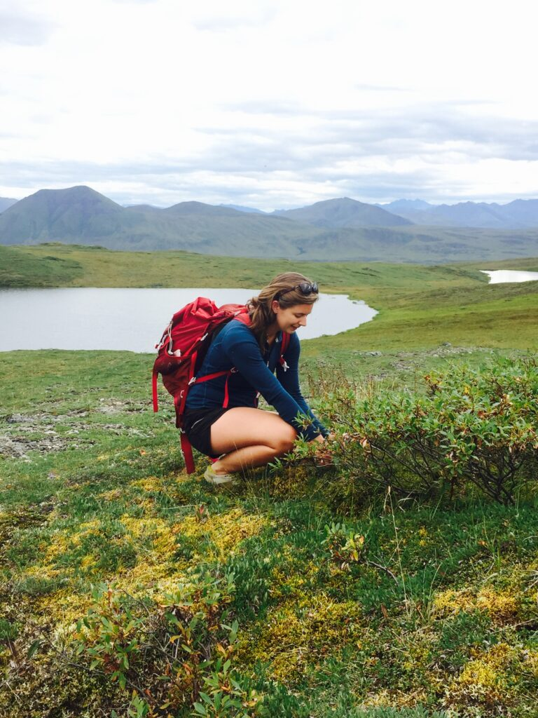 PhD Candidate Haley Dunleavy bends down to examine some of the ecological diversity of the arctic tundra. She is surrounded by green and yellow flora. There is a glacial lake and mountain range in the distance.