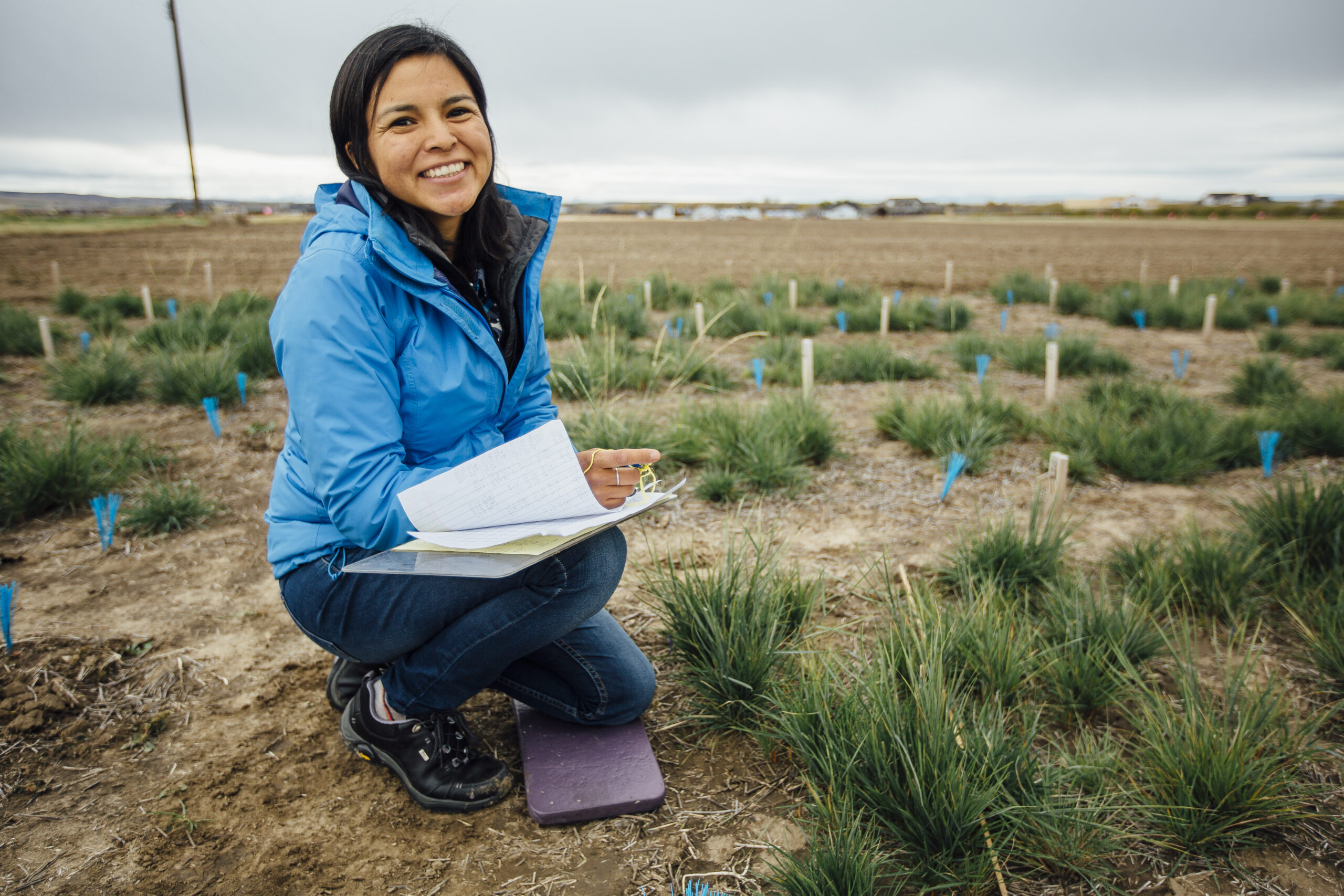 Audrey Harvey, a Montana State University graduate student in the Department of Land Resources and Environmental Science, makes observations on a research plot of bluebunch wheatgrass on Friday, Oct. 7, 2016, at the MSU Post Agronomy Farm in Bozeman, Mont. MSU Photo by Adrian Sanchez-Gonzalez